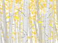 秋季白露养生 注意秋寒秋燥导致发烧掉发