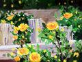 十一月生辰石:黄玉的功效与传说