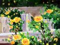 霜降以后 这三种叶子就是养生的宝