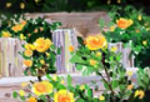 种玫瑰花的阳台风水如何