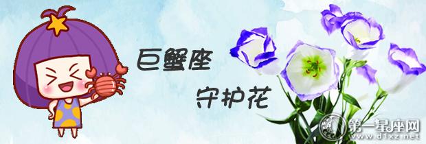 巨蟹座守护花