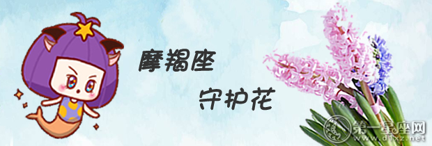 摩羯座守护花