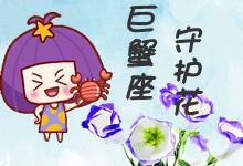 巨蟹座守護花