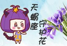 天蝎座守護花