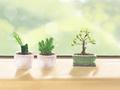 房子客厅摆放什么植物招财