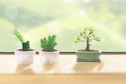 植物花語 冬天適合種什麼植物