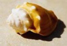 在客厅摆海螺壳对风水好吗
