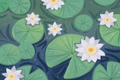 室内装饰中的植物风水怎么布置
