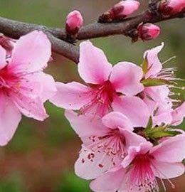 桃花风水宝典