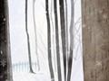 六月的花语是什么?豌豆花