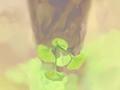 康乃馨花语:17朵康乃馨什么意思?