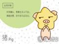 张盛舒 属猪人2019年整体运势