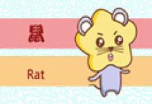 各有各命 属鼠是否好命