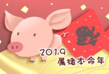 2019属猪本命年
