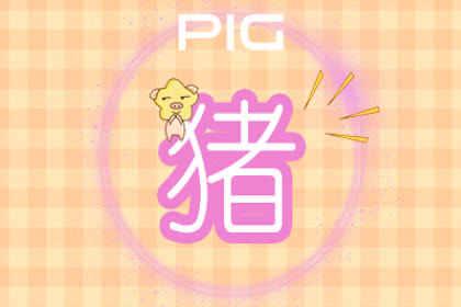 送给属猪本命年礼物