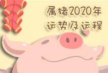 屬豬2020年運勢及運程