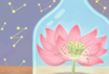 蓝色妖姬花语是代表什么 适合送什么人 11朵 19朵 33朵