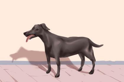 一个女人梦见被一只黑狗咬了