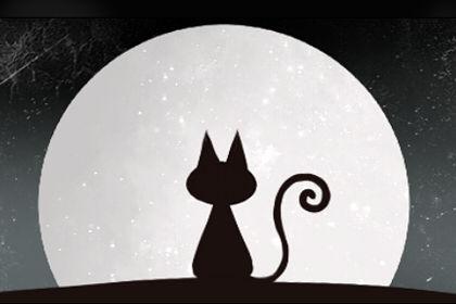 孕妇梦见黑猫生男孩和女孩