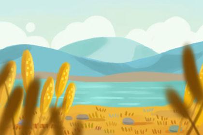 温州黄汤历史发展 品质特征