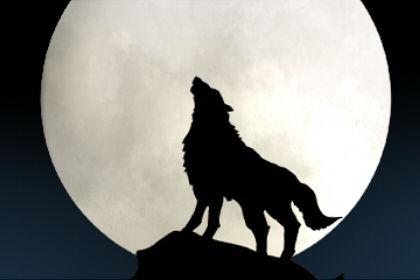 梦到被狼咬了几口预示着什么