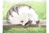 白色的小猫起什么名字好听又能带来幸运