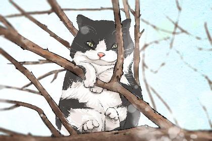 母猫名字大全 超拽霸气的名字推荐