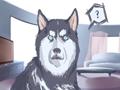 阿拉斯加女狗狗的名字要萌点的好听的