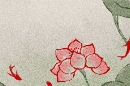 中国红植物又叫什么 需要晒太阳吗