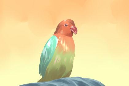 女人梦见鹦鹉说话预示什么意思