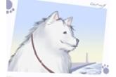 金毛狗的名字洋气点的 有创意的狗狗名字