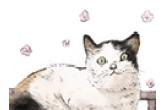 猫咪的名字大全 时尚高雅的猫名字推荐