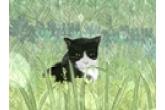 猫咪宠物名字大全萌 超级可爱的名字