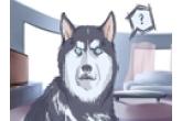 好听的男狗狗名字大全 霸气又拽的名字