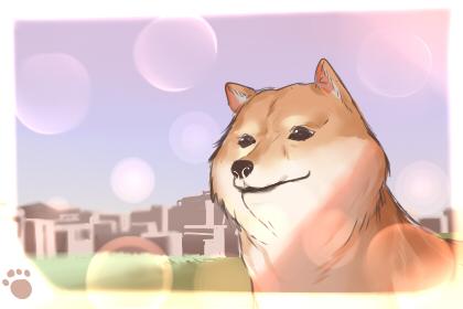 女狗狗的名字可爱霸气 日系宠物名字推荐
