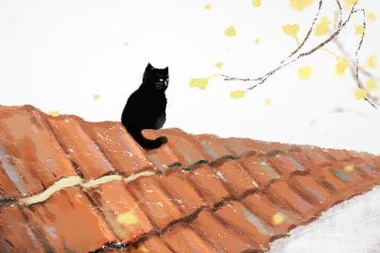 代表好运的猫咪名字大全 吉利又好听