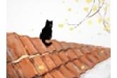 寓意好运的猫咪名字 招财又好听的名字