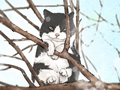 温顺可爱的猫品种有哪些 宠物猫名字推荐