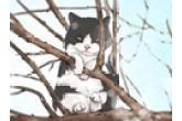 怎么让猫知道自己的名字 猫咪取名技巧