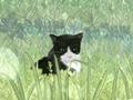 猫咪又土又搞笑的名字大全 逗死了