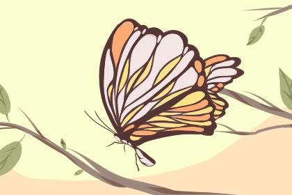 梦见蝴蝶翅膀长在自己身上是什么意思