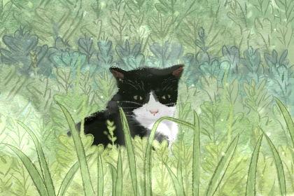 小猫的名字萌一点的 萌宠的名字大全