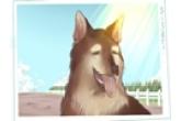 怎么给狗狗极速排列三字寓意平安有福气