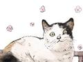 猫咪很逗的名字有哪些 很搞笑很奇葩