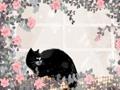 猫咪名字大全 可爱版
