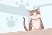 女人梦见猫进屋赶不走有什么预兆