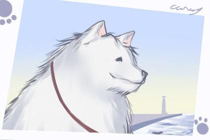 世界狗狗品种大全名字 大型犬宠物起名