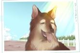 宠物起名字 黑狗叫什么名字吉利有趣