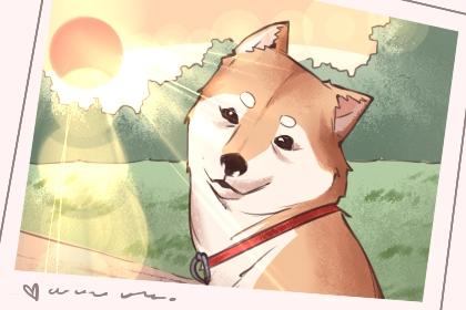 给狗起什么名字好听 公犬名字推荐
