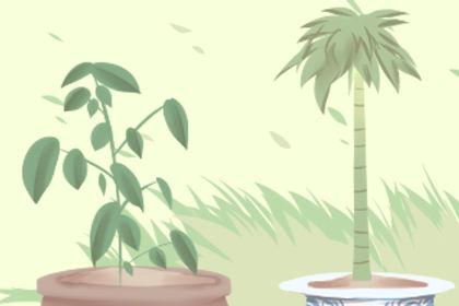 家里催财旺运养什么植物
